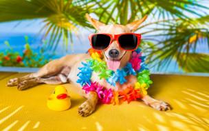 юмор и приколы, очки, юмор, собака, уточка, язык
