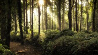 свет, лес, дорога