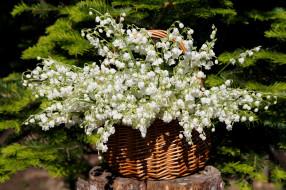 ландыши, май, солнце, нфд, цветение, цветы, сад, природа, дача, весна