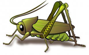 векторная графика, животные , animals, насекомое, кузнечик