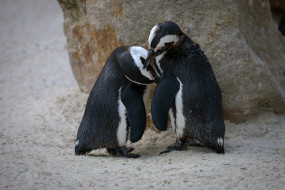 зоопарк, весна, пингвины, любовь