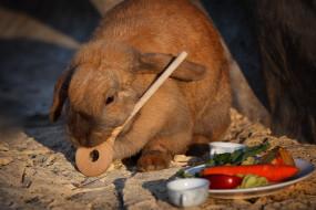 животные, кролики,  зайцы, выбор, кролик, приоритет