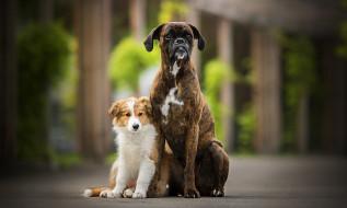 животные, собаки, две, боке, tini, sunny
