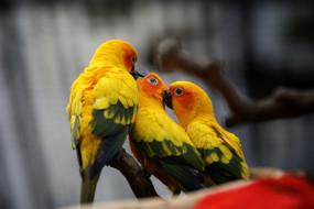 животные, попугаи, зоопарк, красиво, птица