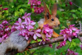 животные, белки, апрель, весна, яблоня