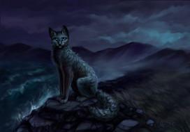 рисованное, животные,  коты, кошка, водоем, камни, ночь