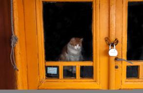 животные, коты, кошка, дверь, замок
