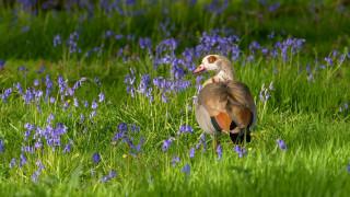 животные, утки, птица, клюв, трава, цветы, утка, перья