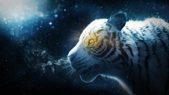 снег, тигр, дым