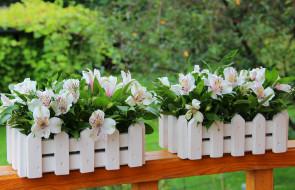 цветы, лето, декорация, букет, красота