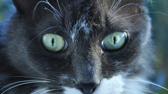 животные, коты, профиль, морда