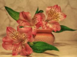 натюрморт, растения, цветы, альстромерия, композиция, красота, лето