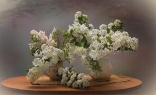 цветы, весна, натюрморт, спирея