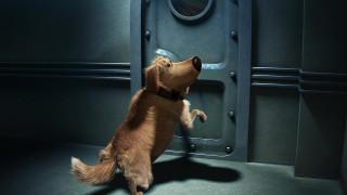 дверь, собака, ошейник