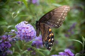 обои для рабочего стола 2048x1365 животные, бабочки,  мотыльки,  моли, бабочка