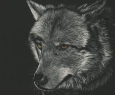 взгляд, волк, фон