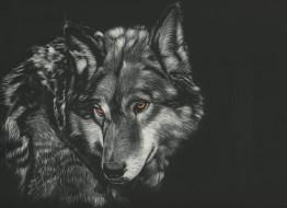 фон, взгляд, волк