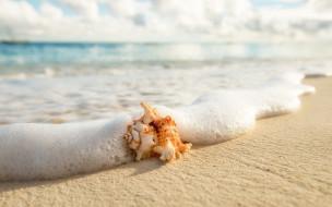 пляж, волна, раковина, море, берег, песок