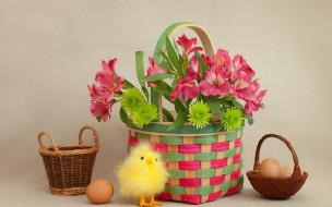 праздничные, пасха, цветы, корзина, яйца, цыпленок