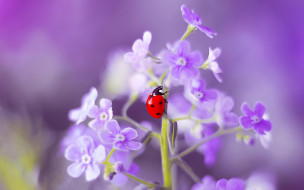 макро, насекомое, цветок, Божья коровка