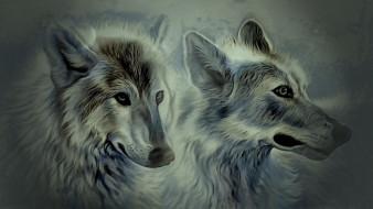 взгляд, фон, волки