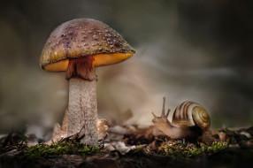 животные, улитки, мох, гриб, макро, улитка