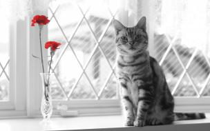 животные, коты, кошка, взгляд, цветы, окно
