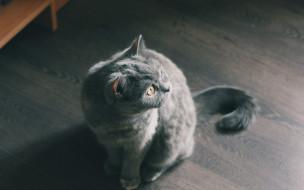 животные, коты, кот, киса, кошка
