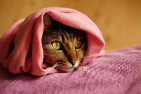 животные, коты, кошка, киса, кот