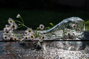 ромашки, капли, ваза, цветы