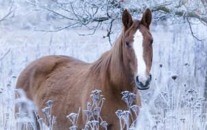 обои для рабочего стола 2560x1611 животные, лошади, иней, конь, трава, лошадь