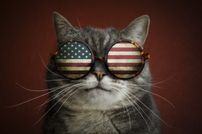 кот, флаг, прикол, очки, усы