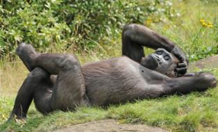 природа, животное, обезьяна, зоо