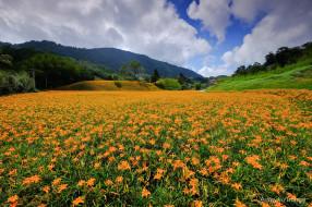 пейзаж, цветы, цветение, природа, лето, лилии, горы