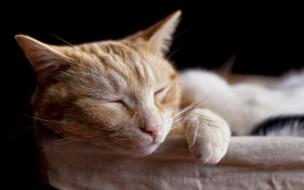 животные, коты, отдых