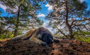 животные, собаки, деревья, облака, отдых