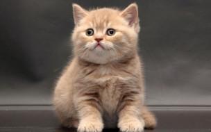 животные, коты, рыжий, цвет, взгляд