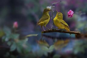 животные, белоглазки, белоглазка, розы, стрекоза, листья, парочка, птички, вода, цветы, ветка, белый, глаз, природа