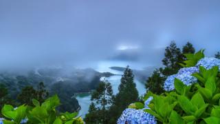 цветы, гортензия, растительность, природа, туман, manuel, oliveira, португалия, холмы, пейзаж, сети-сидадиш, озеро