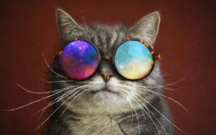 рисованное, животные, очки, усы, кот