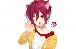 аниме, free, rin, matsuoka