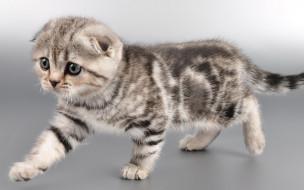 животные, коты, котенок