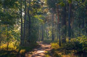 осень, утро, сентябрь, рассвет, тропа, Галанзовская Оксана, лес