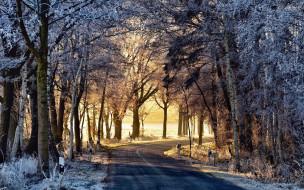 дорога, утро, зима