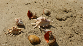 песок, ракушки