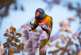 цветы, попугай