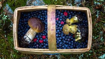 малина, боровики, лукошко, ягоды, грибы, черника
