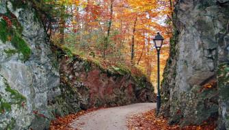 фонарь, осень, листопад