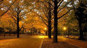 фонари, осень, аллеи, листопад