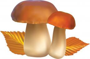 грибы, осень, листья